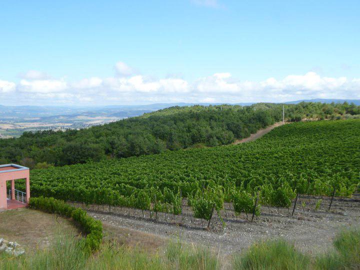 basile's-vineyard