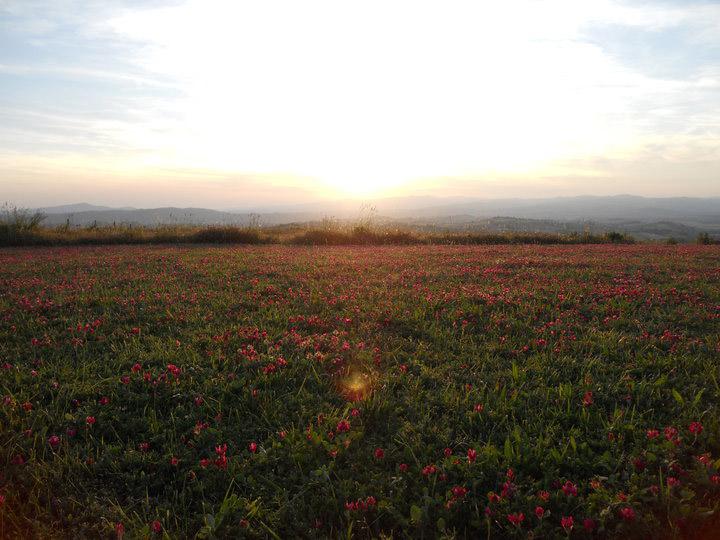 landscape-basile-farm