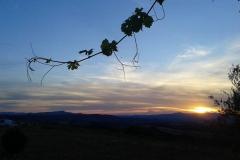 tramonto basile azienda agricola
