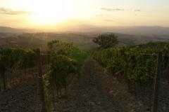 basile-organic-wine-farm