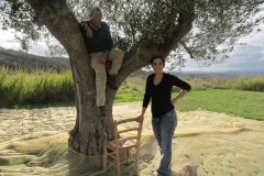 raccolta-olive-basile