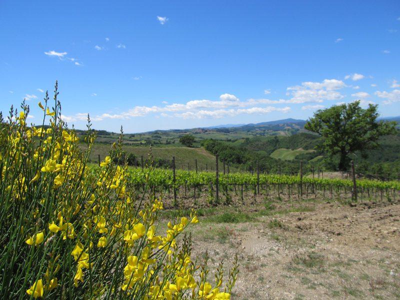 vigne Basile